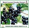 Extracto de pó de groselha preta natural da China com antocianidinas