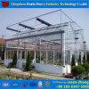 Chambre verte en verre hydroponique commerciale pour le raisin