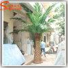 Palmeira artificial da tâmara da fibra de vidro distintiva do projeto