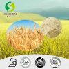 Le gluten de froment essentiel sec/la pente d'alimentation de catégorie comestible de gluten de froment/extrait essentiels protéine de blé ont hydrolysé la protéine de blé/protéine hydrolysée 80% de protéine végétale/blé