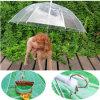 Guarda-chuva transparente do animal de estimação relativo à promoção ao ar livre do projeto da forma