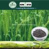 Il carbonio di Kingeta ha basato il fertilizzante organico
