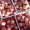 Alta calidad fresca FUJI Apple en la venta (150.138.125.100)