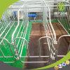Tenda muito popular da gestação com as explorações agrícolas de porco grandes na venda