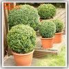 Albero artificiale dei bonsai del Topiary dei bonsai falsi di plastica Aniti-UV della pianta