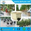 11 het Planten van de liter Hydroponic Nederlandse Emmer van Potten