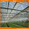 사용 Venlo 장기 유형 온실