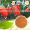 Extrait de Lycium Barbarum Barbury Wolfberry Fruit P. E