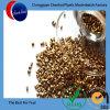 環境の化学薬品LDPE/LLDPE一流の金Masterbatch