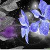 la dispersion de l'orchidée de mite 100%Polyester 3D a estampé le tissu pour le jeu de literie