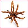 Cordyceps Sinensis (Berk.) Sacc. Poudre
