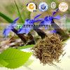 Calamintha chinensis naturale puro di Gentianae di base di Benth
