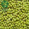 Livro Verde feijão-da-china