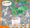 Protezioni dell'albero delle protezioni dell'albero della pianta
