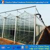 Estufa de vidro galvanizada da Muti-Extensão para o tomate