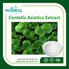 Het kruiden Asiatica Uittreksel van Centella van het Poeder van het Uittreksel van de Kola van Gotu van het Uittreksel