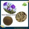 Het Uittreksel van Platycodi van de wortel, het Uittreksel van Platycodon Grandiflorum