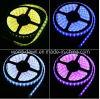 Ce RoHS dos años de garantía de la luz de tira SMD RGB (5050)