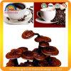 Ganodermaのエキスのコーヒーはのための重量を失う