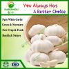 Knoflook van het Knoflook van de Kwaliteit van de premie het Organische Zuivere Witte die door China wordt gemaakt