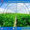 Túnel poli da estufa da multi extensão do estilo de Ásia para tomates