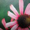屋外広告のための専門の農産物のビニールの旗Frontlit