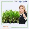 훈장을 정원사 노릇을 하기를 위한 자연적인 본 및 접촉 내화성 정원 인공적인 잔디 뗏장 (EMC-TW)