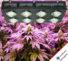 1000W Veg/ÉPI fleurissant DEL de large spectre de commutateurs élèvent des lumières