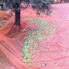 عذراء [ب] حصاد شبكة زيتونيّ اللّون مع مواد [أوف] ([يهز-هون09])