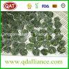 IQF gefrorene vollständige Blatt-Spinat-Kugel