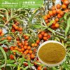 Het natuurlijke Droge Rhamnoides Hippophae Uittreksel van het Fruit van Seabuckthorn van het Poeder van het Fruit