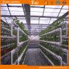 튼튼한 Venlo 구조 다중 경간 유리 온실