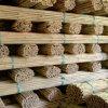Naturaleza seco recta rota cañas de bambú para la venta