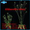 Het Poeder GA van de Gibberelline van de hoge Zuiverheid voor LandbouwGebruik
