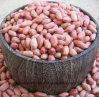 Nuevos núcleos del cacahuete de la cosecha