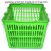 La petite main en plastique de traitement portent le panier à provisions de supermarché