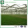 PC- Blad/het Bouwmateriaal van de Serre van het Glas/van de Plastic Film Voor Landbouw/Commercieel