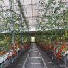 Стальные Structue теплый дом зеленого цвета для выращивания овощей (плоды) пролить
