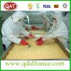 Granturco dolce congelato IQF di alta qualità con nessun GMO