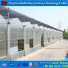 トマトのために使用された温室を販売するはっきりHydroponicポリカーボネートカバー