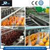 食品加工の企業の果物と野菜のクリーニング機械