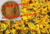 Выдержки Монтаны арники 100% порошок естественной чисто