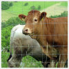 優れた牛農場塀またはフィールド塀か牧草地の塀