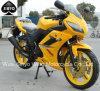 Bicicleta clássica Motorcycl de competência adulto da rua da águia dourada