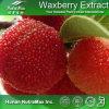100% naturel extrait Waxberry (Ratio : 4 : 1~20 : 1, la myricétine 50 %, 80 %)