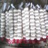Zuiver Wit Vers Knoflook met Kleine Verpakking