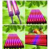 Il tubo del LED coltiva T8 chiaro 4FT per idroponico