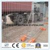 Cerca temporal de acero galvanizada antioxidante de la asamblea fácil para la venta