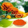 Phytoxanthin met The Purity 98% CAS: 127-40-2