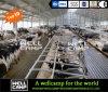 Casa de acero de la vaca de la construcción del metal de Wellcamp con la sala de ordeño
